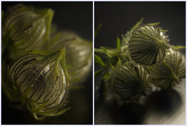 Bihorel-Anallasa-green-flower-5